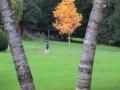 Herbst-04