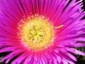 Blume-Wurm