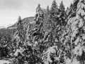 Schneelandschaft-sw